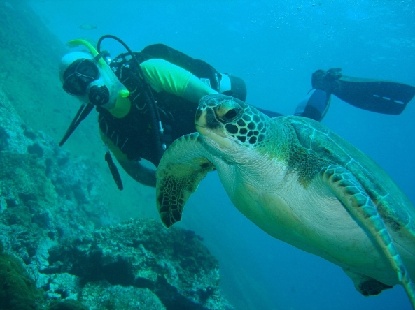 Eu e a tartaruga na Laje de Santos